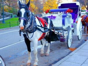 Hestevogn i Central Park