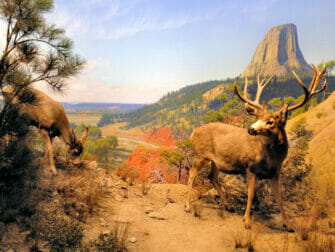 American Museum of Natural History i New York - Diorama med pattedyr