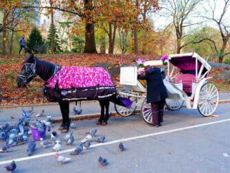 Hestevogn i Central Park - Guidet hestevognstur