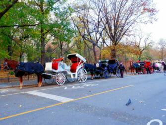 Hestevogn i Central Park - Central Park