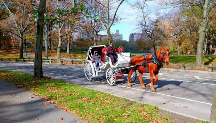 Hestevogn i Central Park - Hestevogne