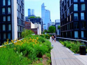 Parker i New York - Sommer i High Line Park