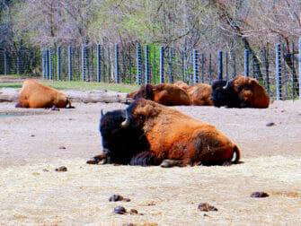 Bronx Zoo i New York - Dyr slapper af