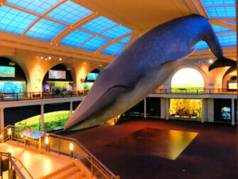 American Museum of Natural History i New York - Livet i havet