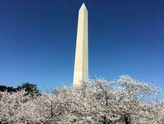 New York til Washington D.C. bustur - Monument