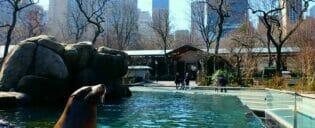 Central Park Zoo billetter