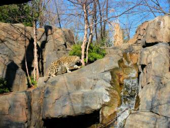 Central Park Zoo billetter - Sneleopard
